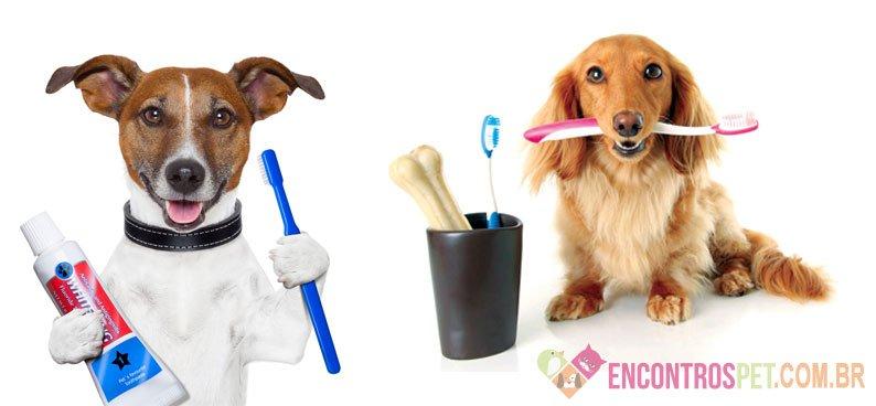 Tártaro em Cães: Sintomas, Como Tratar?