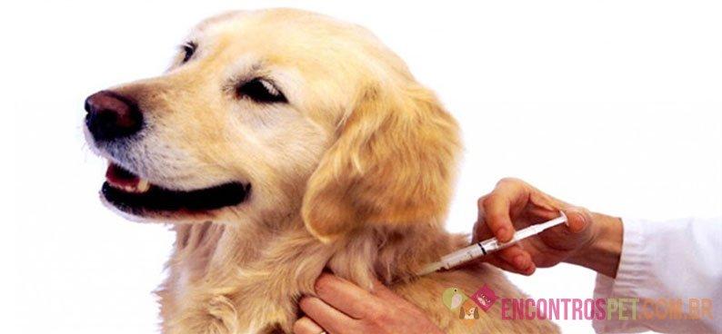 Cinomose Canina: Sintomas, Tratamento, Tem Cura?