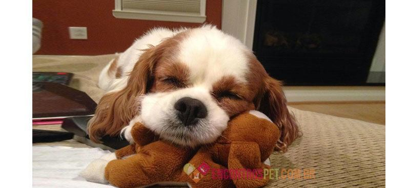 Cachorro-sonhando-01
