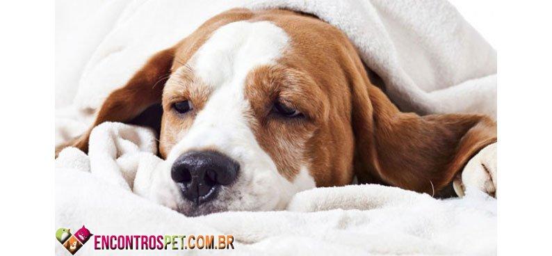 Cachorro-tosse