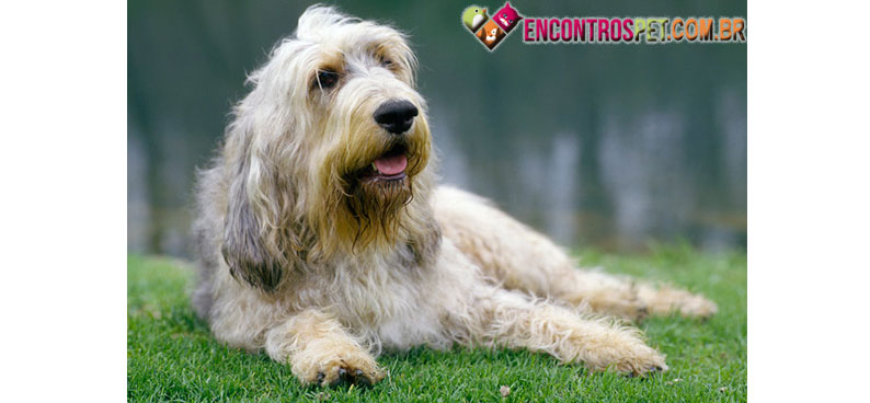 Otterhound-03