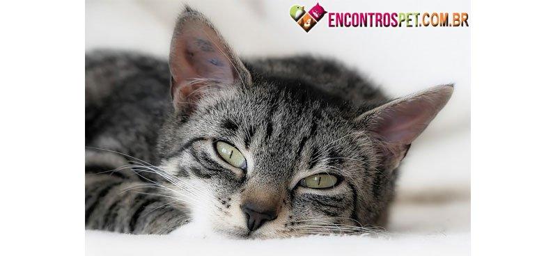 Gato-barriga-01