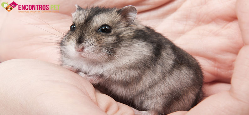 hamster-chines-02