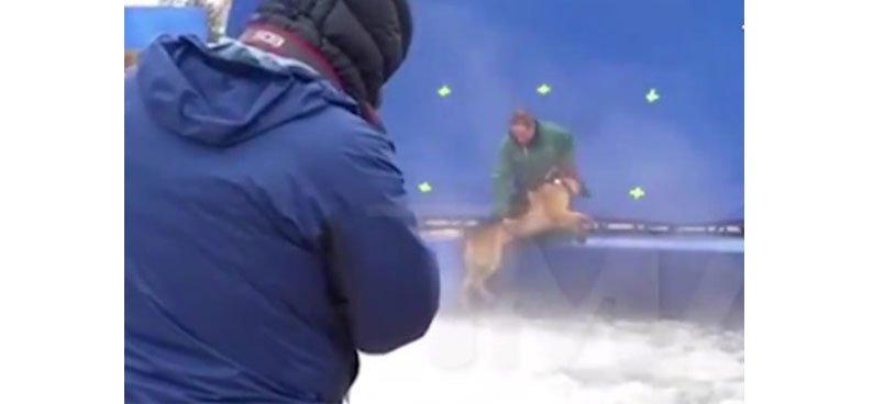 video-cachorro-filme