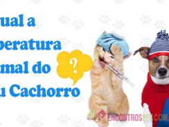 Temperatura Normal do Cachorro e Gato